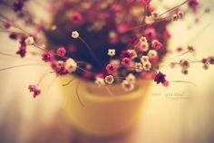 Samuel David Lehrer-tiny Flowers