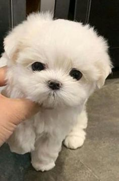 Baby Animals Super Cute, Cute Baby Dogs, Cute Little Puppies, Cute Dogs And Puppies, Cute Little Animals, Cute Funny Animals, Cute Cats, Doggies, Baby Animals Pictures