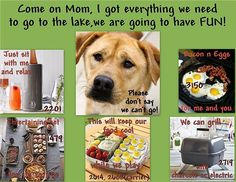 They live for time with you, go camping together!  EXAMPLE of some of my RESCUE FUNDRAISING posts that I can do for your organization. MESSAGE ME to set your date.  For more than just products join me on FB at: Thomason\'s Pampered Pals  #yummy #yummyinmytummy #kitchentime #cooking #dog #makemealtimememories #cookingmadeeasy #kitchentools #homecooking #thomasonspamperedpals #discoverthechefinyou #rescuedog #onlineparty #rewards #free #discounts #pamperedchefparty #virtualparty #recipes #foodaddict #camping #kidsloveit #fall #fundraiser #fundraising #rescues #animalshelter #messageme  Yummery - best recipes. Follow Us! #kitchentools #kitchen