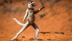 Les 10 photos les plus drôles d'animaux en 2015 - Fondation 30 Millions d'Amis
