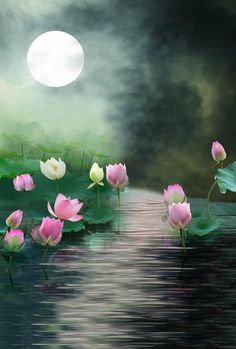 Purchase Lake Lotus Moon Photography Backdrops Photo Props Studio Background from Ann Pekin Pekin on OpenSky. Moonlight Photography, Moon Photography, Background For Photography, Photography Backdrops, Background Images, Photo Backdrops, Photography Backgrounds, Photo Props, Lotus Garden