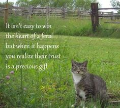 This is so true. ferals deserve food, love, and attention too. spay and neuter your pets so we can prevent so many more homeless cats. Cat Quotes, Animal Quotes, Cat Sayings, Crazy Cat Lady, Crazy Cats, Feral Heart, Animals And Pets, Cute Animals, Feral Cats