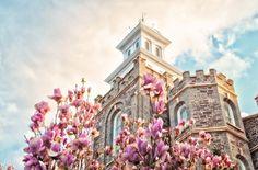 Warum die Mormonen fieberhaft Ahnenforschung betreiben