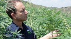 Hemp industry wins the legal OK from NT Govt Paul Burke, Sleep Apnoea, New Industries, Medical Cannabis, New Opportunities, Pet Health, Hemp, First Time, Australia