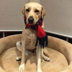 For Dogs Who Deserve The Best (@frankandarlo) • Instagram photos and videos Designer Dog Beds, Sheep Wool, Memory Foam, Your Pet, Labrador Retriever, Luxury, Videos, Dogs, Photos