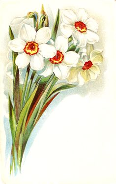 victorian flower images | , or narcissus, from a Victorian post card. These friendly flowers ...