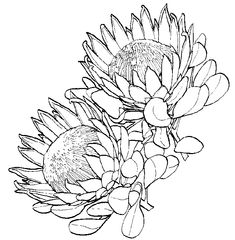 Key Techniques For Getting The Most From Your Garden – Ideas For Great Gardens Protea Art, Floral Drawing, Line Drawing, Drawing Step, Art Drawings Sketches, Fabric Painting, Botanical Illustration, Botanical Prints, Art Techniques