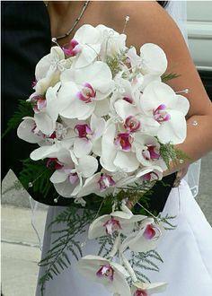 Bridal bouquets with orchids. Bridal bouquets with orchids and roses. Bridal bouquets with orchids and calla lilies. Bridal bouquets with orchids. Bridal bouquets with blue orchids. White Orchid Bouquet, Orchid Bridal Bouquets, White Orchids, Bride Bouquets, White Roses, Bridesmaid Bouquet, Wedding Flower Pictures, Beach Wedding Flowers, Wedding Flower Arrangements