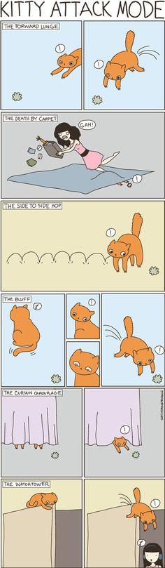 11 extraños hábitos de los gatos que quizás nunca entenderemos
