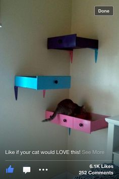 Old drawers used as cat shelf