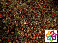 MICHOACÁN MÁGICO te dice. Es un lugar de salud, reposo, cultura y diversión. Es rico por sus bellezas naturales compuestas de pinos, encinos y oyameles. Cuenta con lagunas y manantiales de agua termal. A esta región se le conoce con el nombre de el País de la Monarca en Michoacán.  http://www.recorriendomichoacan.com