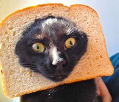 For my cake day: A cat in bread. - Imgur