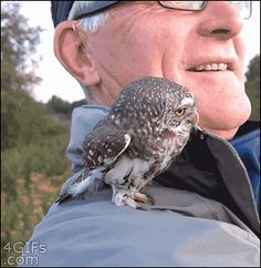 Search, discover and share your favorite Northern Pygmy Owl GIFs. The best GIFs are on GIPHY. Funny Owls, Cute Funny Animals, Funny Cute, Beautiful Owl, Animals Beautiful, Owl Gifs, Animals And Pets, Baby Animals, Tier Fotos