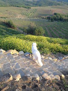 Stella in Panzano
