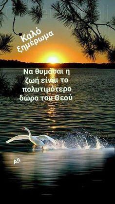 Greek Beauty, Drink, Mom, Movies, Movie Posters, Beverage, Films, Film Poster, Cinema