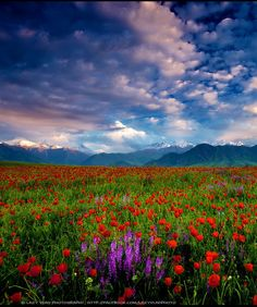 Spring in Kyrgyzstan by Lazy Vlad