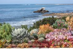 """From my Sunset magazine article, """"How to Create a Sea Creature Succulent Garden"""""""