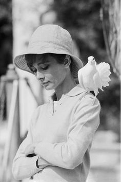 "pure beauty -  Photographer Terry O'Neill says of his beautiful shot of Audrey Hepburn...  ""The famous shot of Audrey Hepburn was just incredible. We were in the garden in the South of France and she was just a total pro - so great to work with. We were shooting and the dove just landed on her shoulder... she looked down and I got the shot and two frames later it flew away again. Incredible."