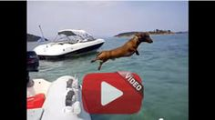 This dachshund has a better vacation than most people - I Love Dachshunds