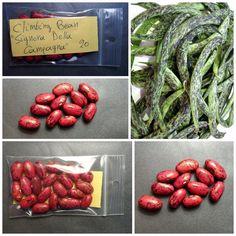 Mega Productive! EXTRA RARE Climbing Bean /'/'Helda/'/' ~50 Top Quality Seeds