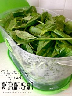 How to keep your spinach fresh.  Save money and waste by storing it the right way.  #thekolbcorner