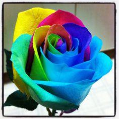 love: rainbow roses  BEAUTIFUL