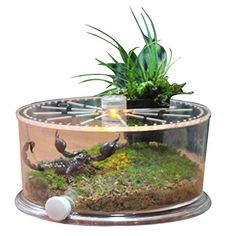 Office table fish tank, suitable for turtle, fish, reptil... https://www.amazon.com/dp/B074V7CJVW/ref=cm_sw_r_pi_dp_U_x_S1H1Ab1QFB6BN