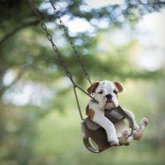 Sexta-feira sua linda!  #cãesfelizes #sextalinda #sextafeira #bomdia #cães #cute #cachorro #pet #mypet #mydog #love #life #doglife #doglover #doglovers #like #likes #like4like #animal #instadog #instapet #instagood #instalike #ilovedogs #instadaily #instasize #tagsforlikes #tweegram #riodejaneiro by caesfelizes