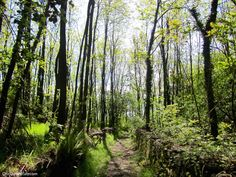 Hiking the Chestnut Path on Lago Maggiore: take this beautiful tourist path from Stresa to Belgirate on northern Italy's Lake Major | OneDayInItaly.com | Italian Travel & Culture Blog