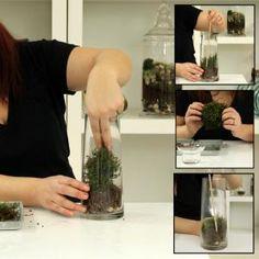 How create a moss terrarium