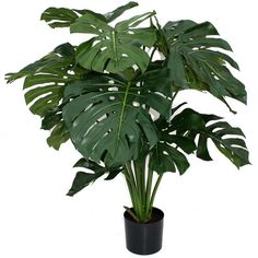 Artificial Giant Monstera Plant Decor | Wayfair (2,435 MXN) ❤ liked on Polyvore featuring home, home decor, floral decor, plants, fillers, flowers, nature, flower stem, floral home decor and flower home decor