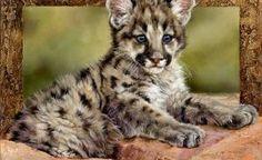 38b180abc0c0 cougar baby kitten wild cat cute Big Cats Art