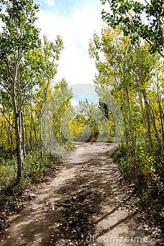 Photo about A small mountain road bordered by young aspen trees starting to turn yellow in the mountains of Colorado above Boulder. Image of above, blue, small - 79510789 State Of Colorado, Aspen Trees, Bouldering, Beautiful Landscapes, Country Roads, Stock Photos, Mountains, Yellow, Image