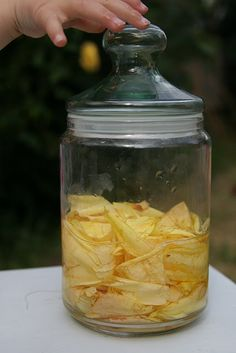 Outdoor activites: Make Rose Petal Fairy perfume using rose petals and water.