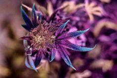 Beautiful plant.