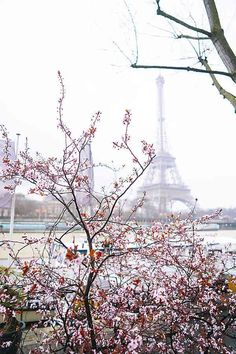 The ultimate guide for going to Paris with kids! Where to stay, how to get around, what to do, what to eat. The best activities in Paris for kids.