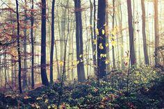 Beech forest. Trzebnica. Poland.