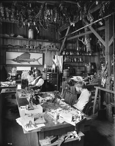 taxidermist's shop, early C20th