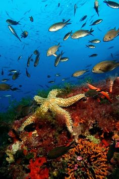 Las plantas en un arrecife de coral | Vida Marina | Vida ...