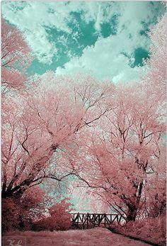 30 Beautiful Trees – Photography