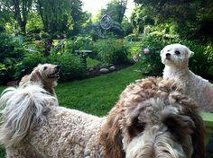 The Pet Sitta - Lisa J. Smith, Portland, Maine, visit full profile @ http://gayweddingsinmaine.com/the-pet-sitta-lisa-j-smith.html