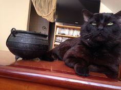 Be a witch there you are! My cat Fofo that I love!