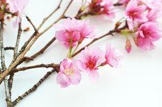 adoro FARM - floriografia: flor de cerejeira