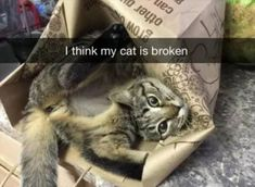 Funny Animal Picture Dump Of The Day 24 Pics This is zoo my cat