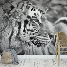 Fotobehang tijger close up zwartwit | Je kunt de snorharen van deze tijger bijna tellen bij dit  behang. Het fotobehang is op maat en in verschillende typen behang verkrijgbaar. Je krijgt altijd eerst een GRATIS digitale drukproef, zodat je precies kunt zien wat je hebt besteld. #fotobehang #fotomuur #fotowand #behang #behangen #vliesbehang #zelfklevend behang #zelfklevend #pre-pasted #diy #fotoprint #tijger #zwartwit #zwart #wit #grijs #closeup #dier #katachtige #opmaat #maatwerk Cat Bedroom, Dream Decor, Big Cats, Close Up, Street Art, African, Prints, Gatos, Animales