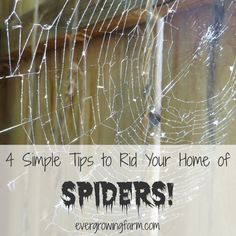 While spiders are part of a healthy ecosystem, no one really wants them in their homes! Here's how to get rid of them quickly, easily, & cost effectively!