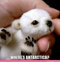 cute baby animals with captions | Where's Antarctica?