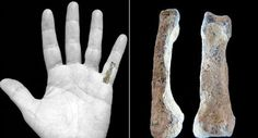 Ancient hominin finger bone found.  The location of the bone in the left hand.