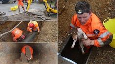 Dog stuck in pipe for 4 days was rescued!