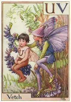FLOWER FAIRIES/BOTANICALS: Vetch; This is an original vintage Cicely Mary Barker Flower fairies colour print. It is not a modern reproduction, c1934; approximate size 11.0 x 7.5cm, 4.25 x 3 inches